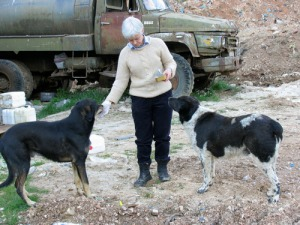 Voluntourism_IN and OUT_dogs greece II-thumb-500x375