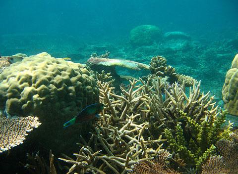 Bawah Islands-Anambas Islands-RIAU ARCHIPELAGO-12