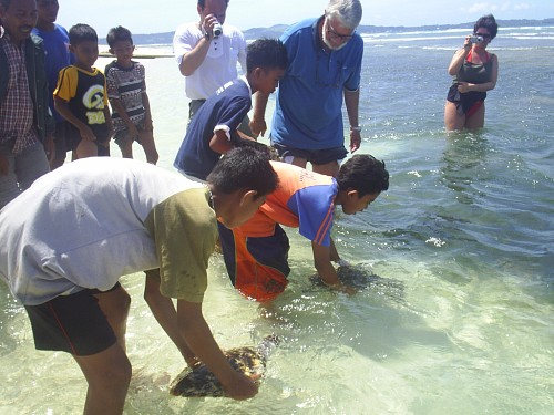 Releasing marine turtles back to their native habitat.
