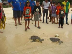 Gangga Island Resort-MANADO-INS-turtles06