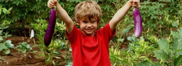 Green School-BALI-aubergines