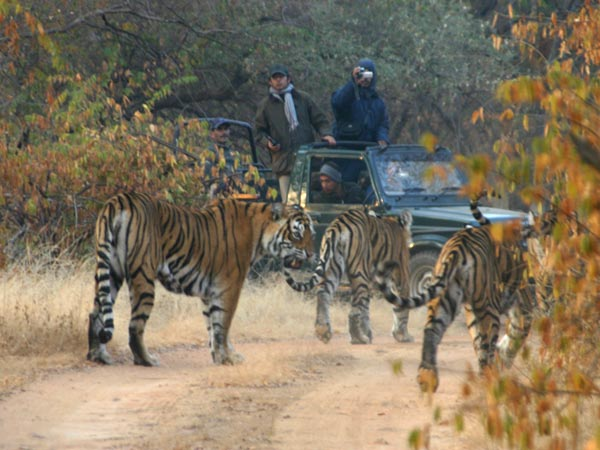 Sher Bagh-safari1