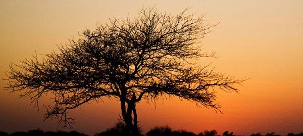The Serai-Jaisalmer-INDIA-location