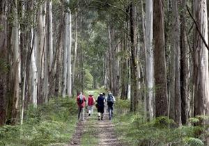 Both Feet Walking Eco Lodge-VIC-OZ-7