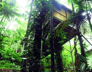 Daintree Eco Lodge-QLD-OZ-2