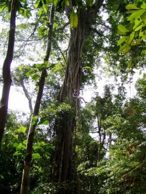 Langkawi Canopy Adventure-MALAYSIA-9