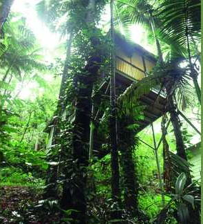 Tree House-Daintree Eco Lodge-QLD-OZ-1