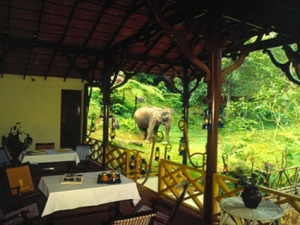 Tree House-Green Magic Nature Resort-Kerala-INDIA 3