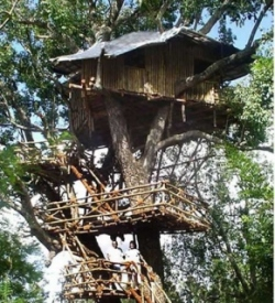 Tree House-Wild Canopy Reserve-Tamil Nadu-INDIA 2