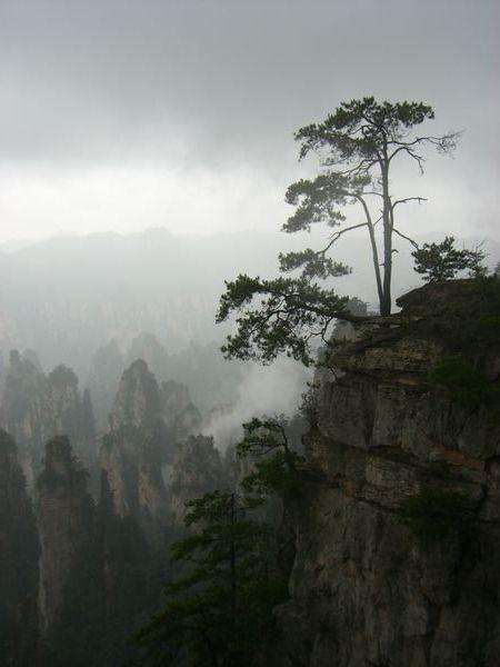 Zhangjiajie National Park-CHINA-2