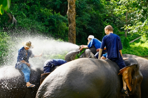 Elephant Camp Chiang Mai-Mahout Training Course-elephants love bath time, they get it twice daily