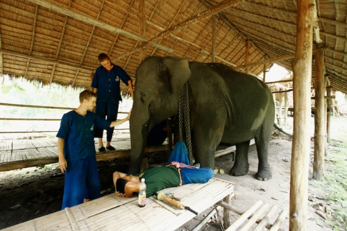 Elephant Camp Chiang Mai-Mahout Training Course-rise and shine elephants! Time for breakfast
