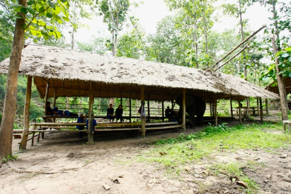Elephant Camp Chiang Mai-Mahout Training Course-time for a respite. Ecotourism at its best