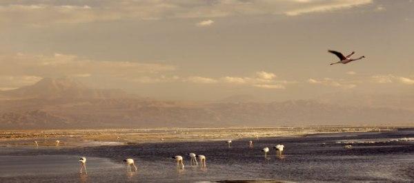 Explora Atacama-Hotel de Larache-CHILE 9