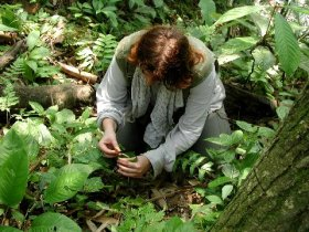 Orang Utan Volunteer-Ivona at work in the jungle (Photo Chris Bannister)