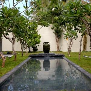 sri-lanka-frangipani-tree-gallary-large-02