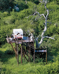 Treetop Retreats-Chalkley Treehouse-Lion Sands 2