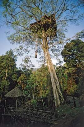 Treetop Retreats-Green Magic India-photo Dave Young for The Guardian 2