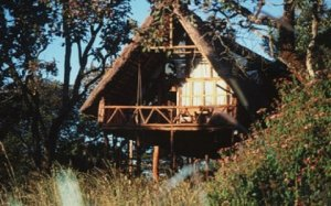 Treetop Retreats-Ngong House-KENYA 5