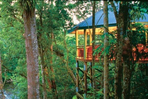 Treetop Retreats-Silky Oaks Lodge-QLD-OZ 3