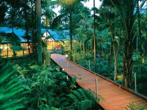 Treetop Retreats-Silky Oaks Lodge-QLD-OZ 4